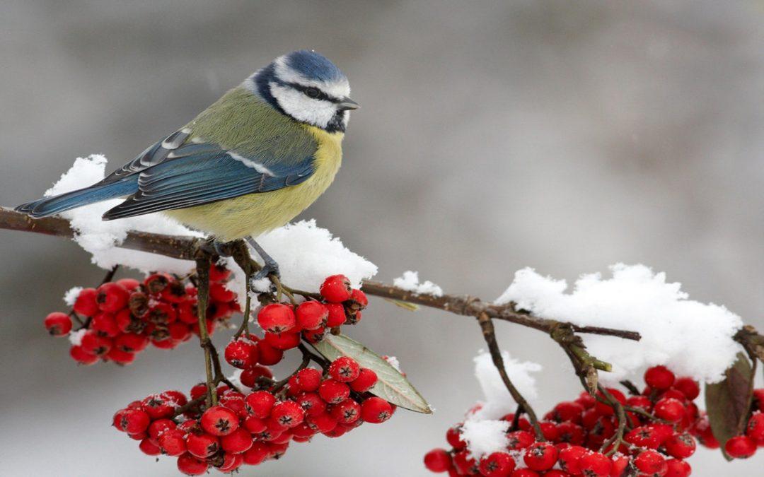Winternieuws en DE voorjaarskleur!
